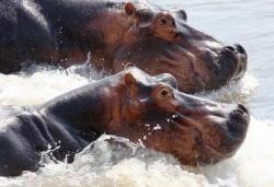 Ein Paradies für Tiere - Afrikas wildes Herz (The Great Rift)