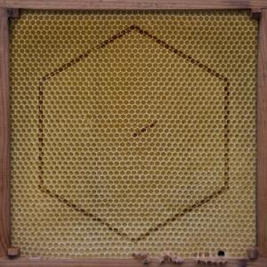 Covermotiv - Beekeeper