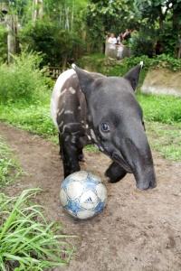 Champions League: Baru aus dem Zoo Leipzig gibt seine Finalprognose ab